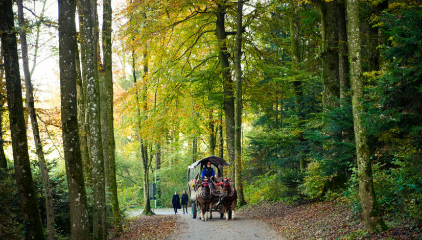 Horse Carriage in the woods during Autumn