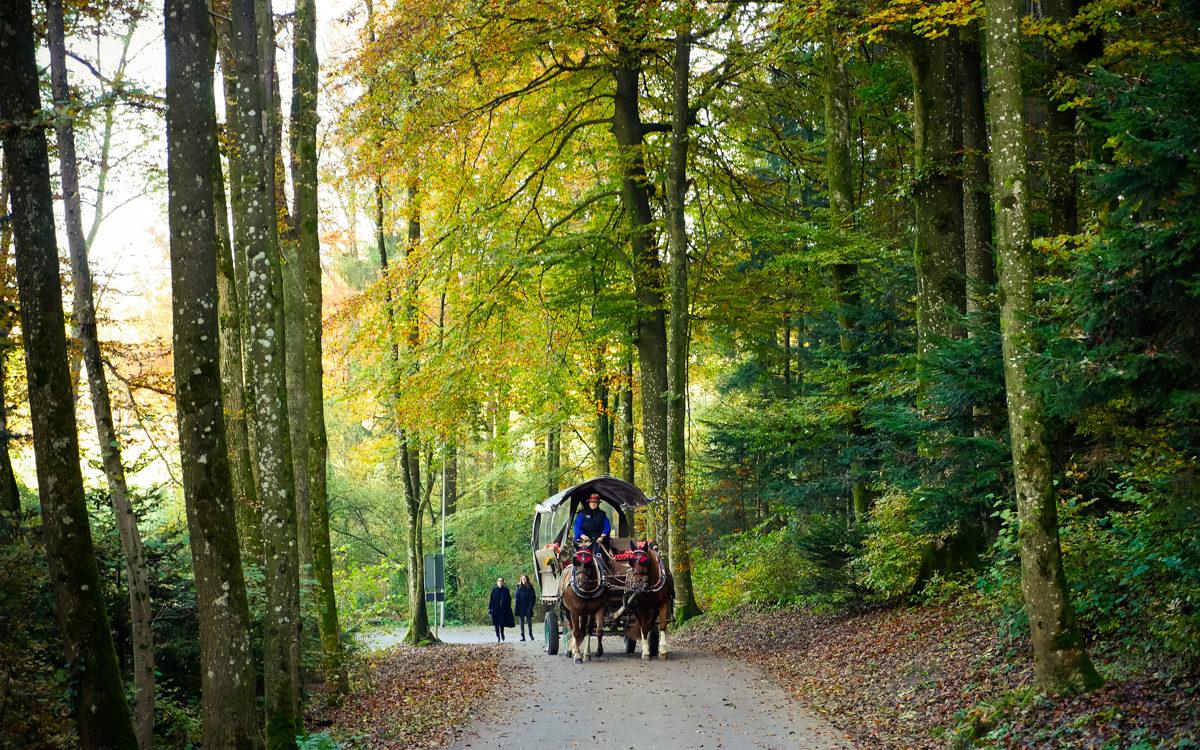 603 | Autumn in Switzerland