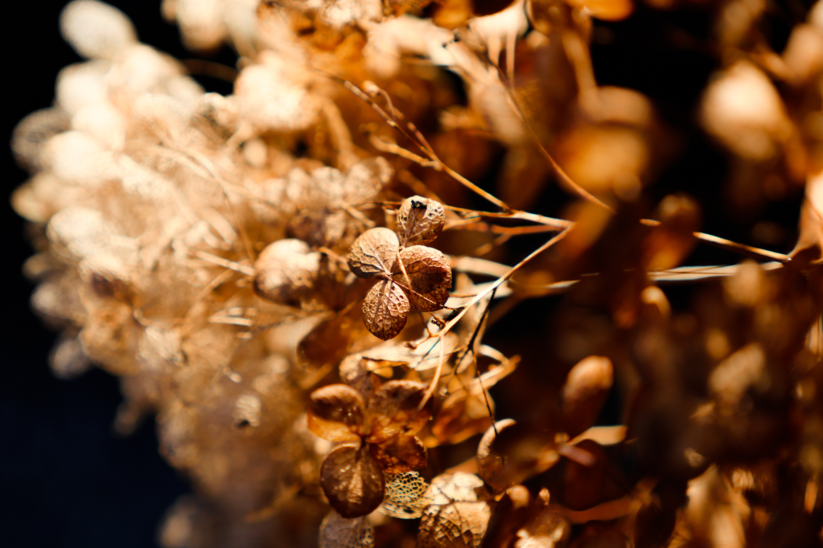 dried-flower-in-the-sun