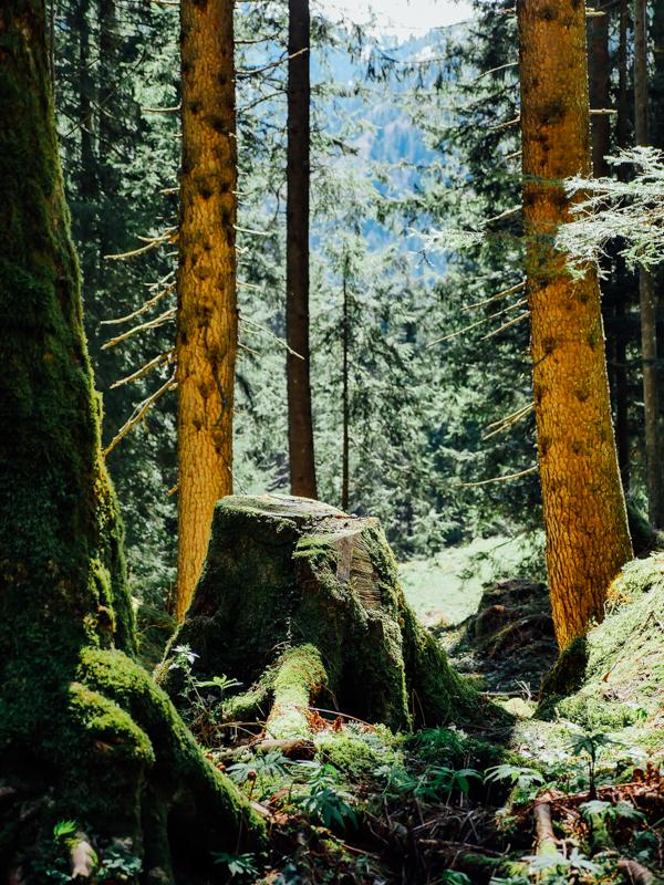 Mystical moss land