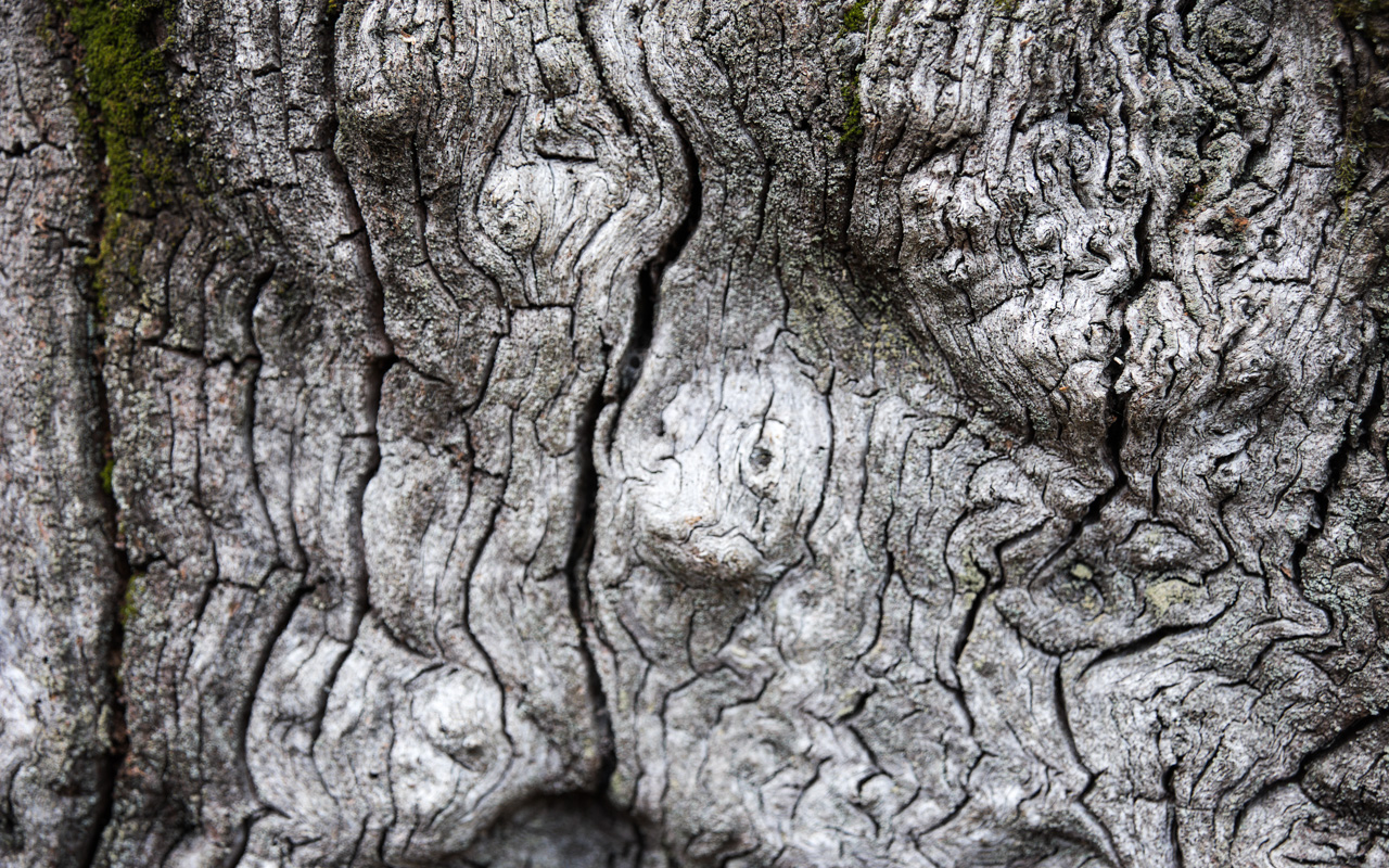 Details of ancient trees.