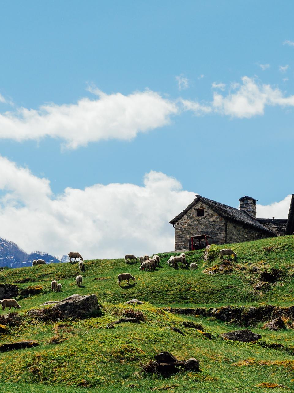 Typical Swiss landscape!
