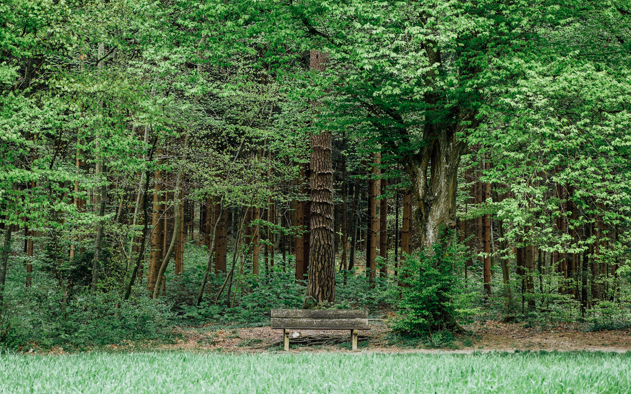 This bench stands very near to the tulip garden, the woods, vast field and the lake.  Location: Rehalp.
