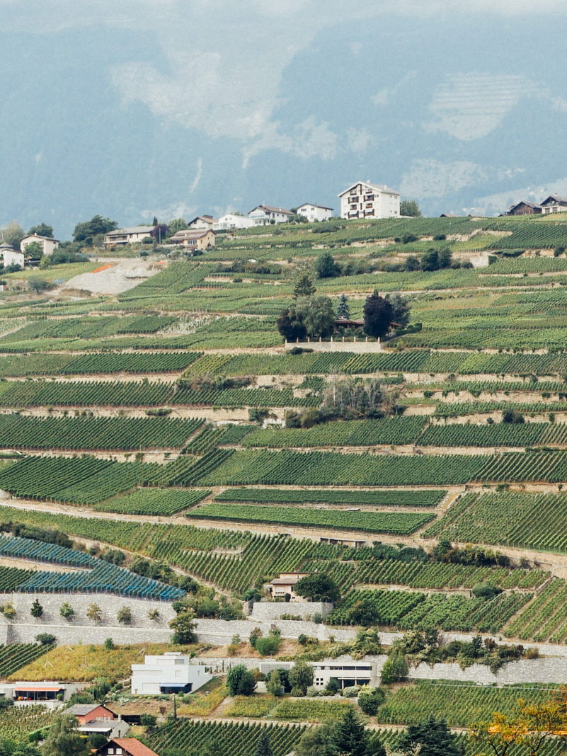 Terraced vineyard of Sion.