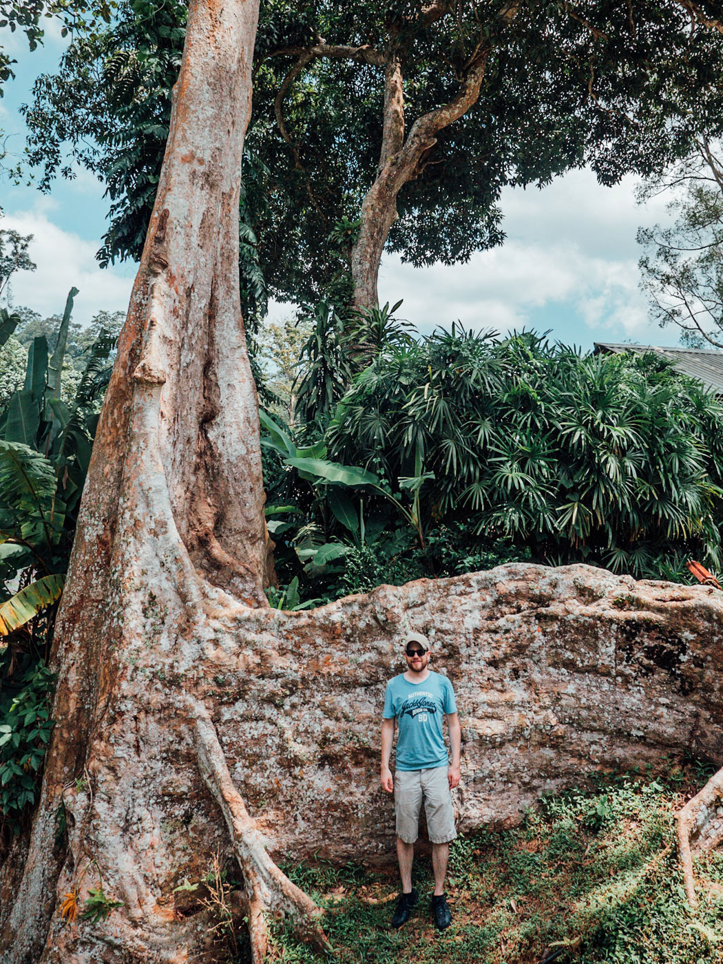Century-old tree in the Penang Botanical Garden.